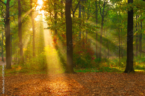 beautiful autumn forest lit by sunlight - 75879040