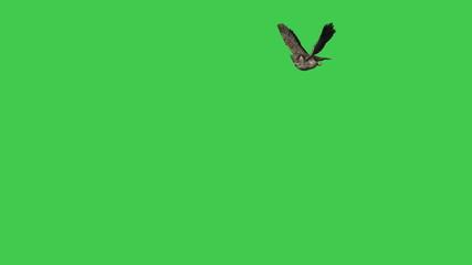 Owl - Flying