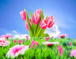 Frühlingswiese vor blauem Himmel