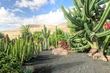 Jardin de cactus à Fuerteventura