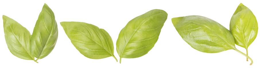 3 basil leaves isolated