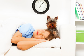 View of small Yorkshire Terrier with sleeping boy