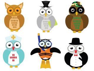 career owl