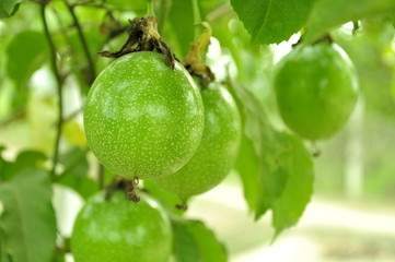 Passion fruit for make juicy