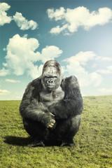 Silverback Gorilla looking at camera