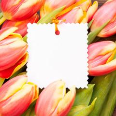 Tulpen mit Karte