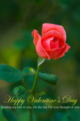 Beautiful red rose on green background