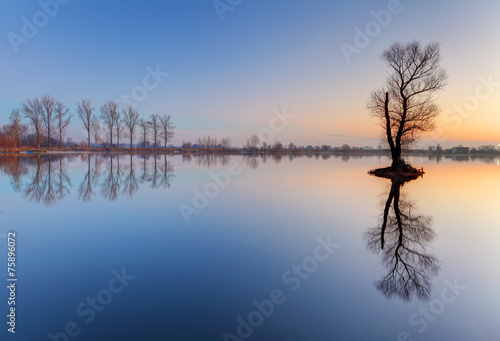 canvas print picture Alone tree in lake with color sky