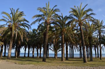 Torremolinos, playa, palmeras, Málaga, Andalucía