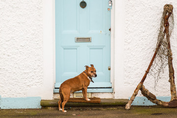 Dog waiting to be let in a front door