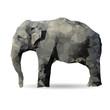 Obrazy na płótnie, fototapety, zdjęcia, fotoobrazy drukowane : elephant