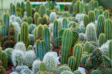 cacti different varieties