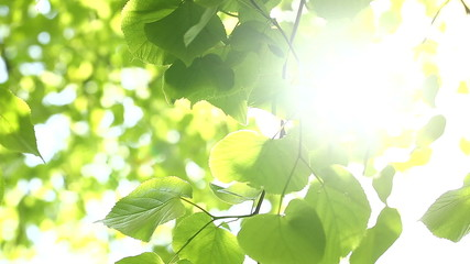Sunlight beaming between green leaves on a sunny day