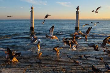 Columns Dock