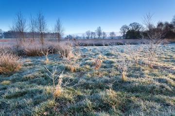 marsh in morning winter frost