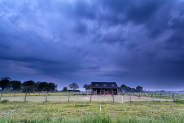 pony on farmland at stormy morning