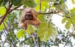 Sloth - 75903288