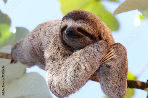 Zdjęcia na płótnie, fototapety, obrazy : Sloth