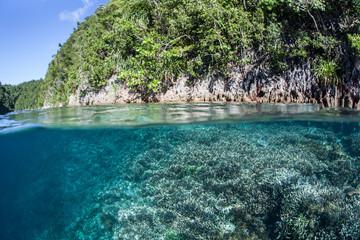 Limestone Island and Shallow Reef