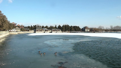 The wild ducks walk on the ice in the Summer Palace