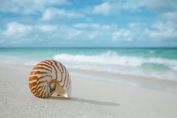 nautilus shell on white beach sand, against sea waves