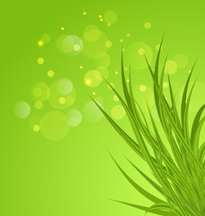 Spring background background with green grass