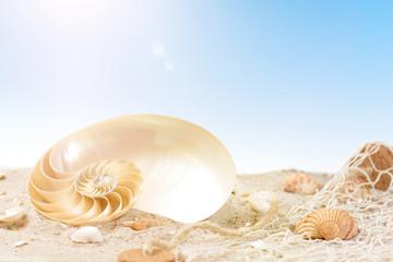 Meeresschätze am Sandstrand