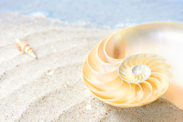 Nautilus (Perlboot) an hellem Sandstrand