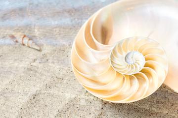 Nautilus im flachen Wasser eines Sandstrandes