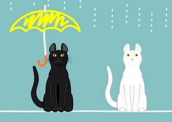 傘のある猫とない猫