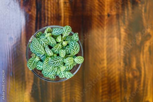 Tuinposter Olijfboom Little tree on table