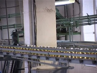 set of cans moving on a conveyor belt