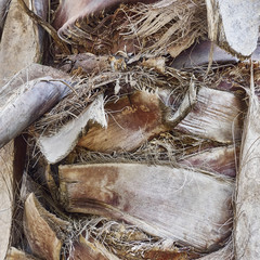 rough palm trunk closeup, natural background