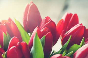 Valentine day concept:  bunch of red tulips