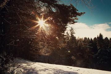 Sonnenstrahlen im Schnee ©yvonneweis