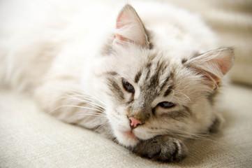 Müde Katze auf Couch