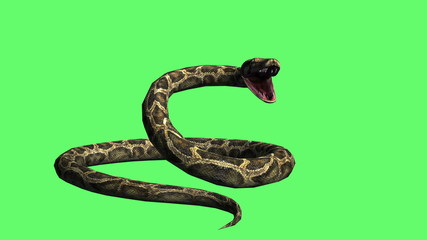 Snake - python Green Screen