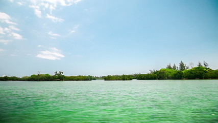 mangroves Mauritius Ile aux Cerfs