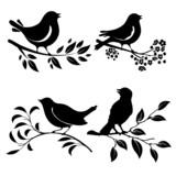 Fototapety Bird on branch