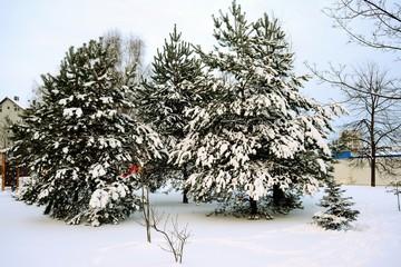Winter in capital of Lithuania Vilnius city Pasilaiciai