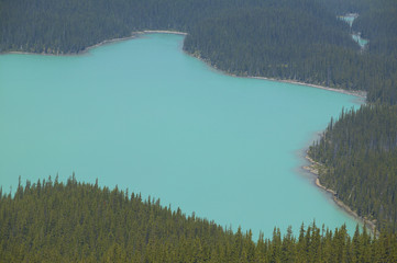 Peyto lake landscape with forest. Icefield parkway. Canada