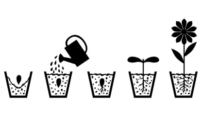 Scheme of plant growth from seed to flower