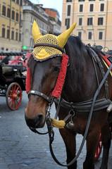 Cavallo con calesse a Roma, Italia