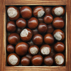 Chestnut, collection of products