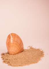 seashell nice brown colored with beach sand as holiday concept