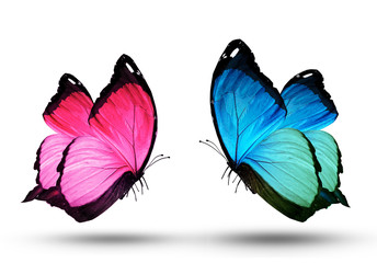 Pink and blue butterfly, isolated on white