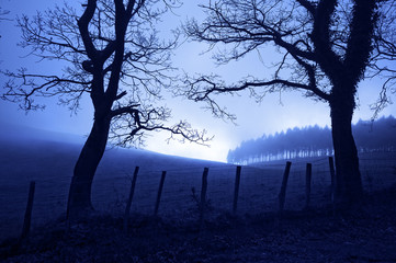 horror landscape at night with creepy trees