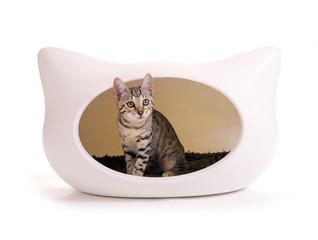 Katze in Spielhöhle