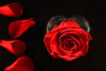 rosa e petali
