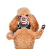 Dog with magnifying glass. Smile.